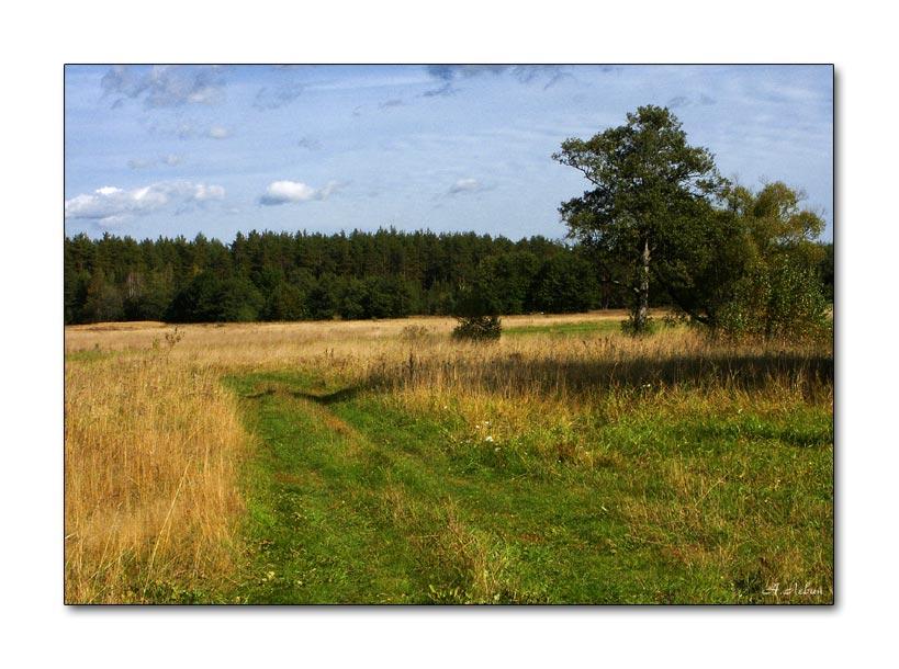 """фото """"Поле, русское поле..."""" метки: пейзаж, осень"""