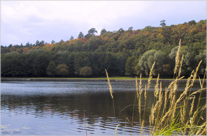 "фото ""По верхушкам леса пробежалась осень..."" метки: пейзаж, вода, осень"