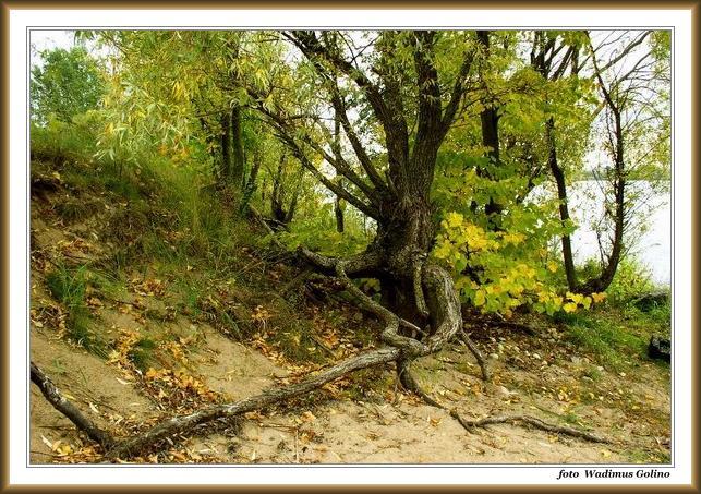 """фото """"Приближение осени."""" метки: пейзаж, природа, осень"""