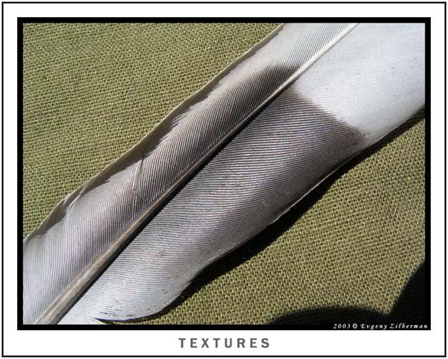 """фото """"Textures"""" метки: макро и крупный план,"""
