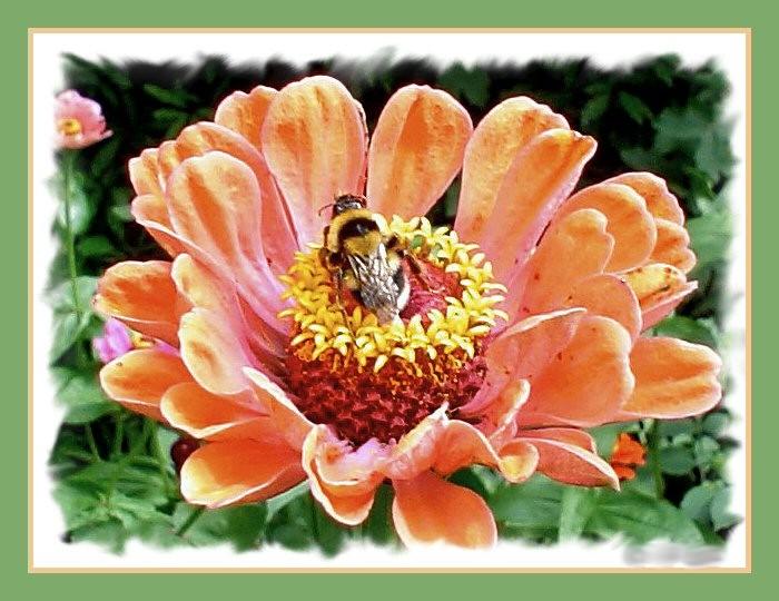 """фото """"Flor"""" метки: природа, насекомое, цветы"""