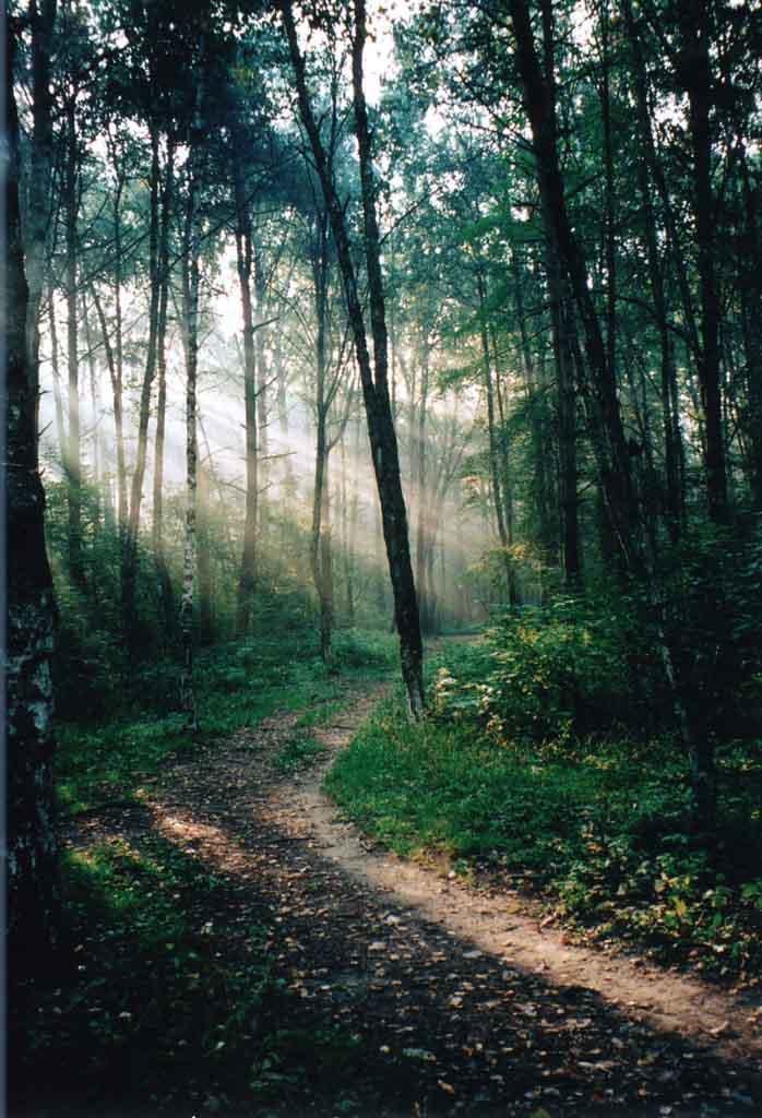 "фото ""Осенний сюжет"" метки: пейзаж, лес, осень"