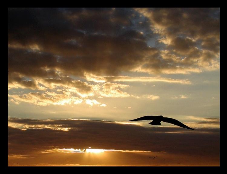 "фото ""Freedom"" метки: пейзаж, закат"
