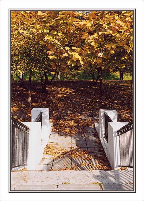 """фото """"Добро пожаловать в Осень"""" метки: пейзаж, лес, осень"""