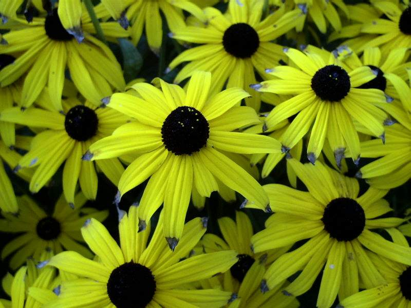 "фото ""Summer flower."" метки: разное,"