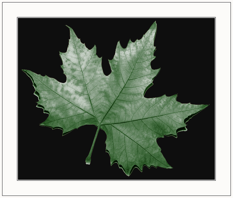 "фото ""The autumn began"" метки: разное,"