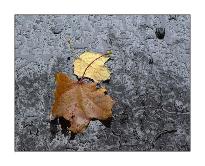 """фото """"Осень наступила"""" метки: пейзаж, вода, осень"""