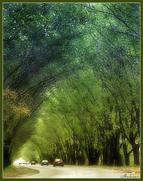 """фото """"Трасса Е-95 осенью."""" метки: пейзаж, природа, осень"""