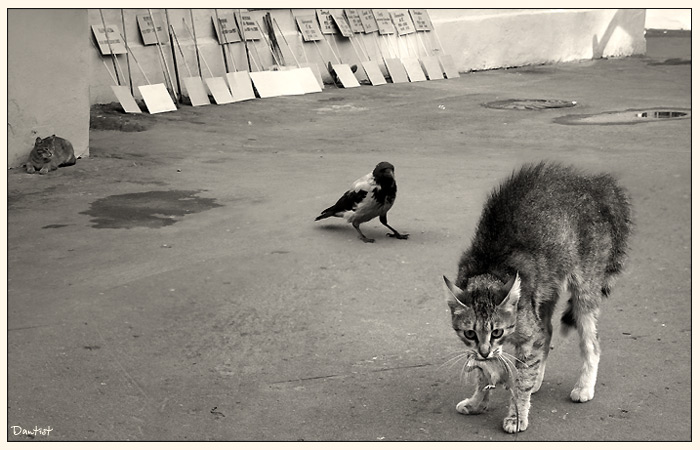 """фото """"Добытчик"""" метки: природа, жанр, домашние животные"""