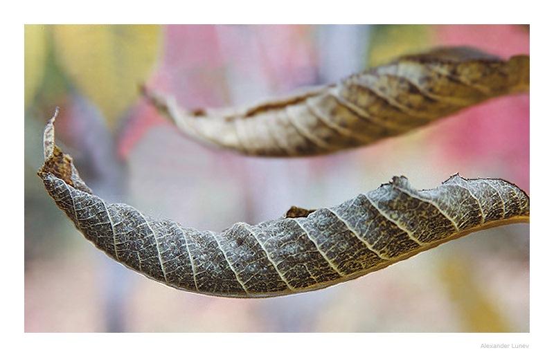 """фото """"Лодочки"""" метки: природа, макро и крупный план, цветы"""
