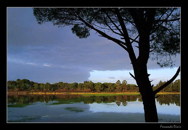 "фото ""The lake"" метки: пейзаж, вода, лес"