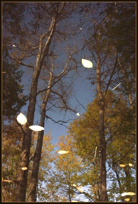 """фото """"October Sky, or Reflection No.5"""" метки: пейзаж, вода, осень"""