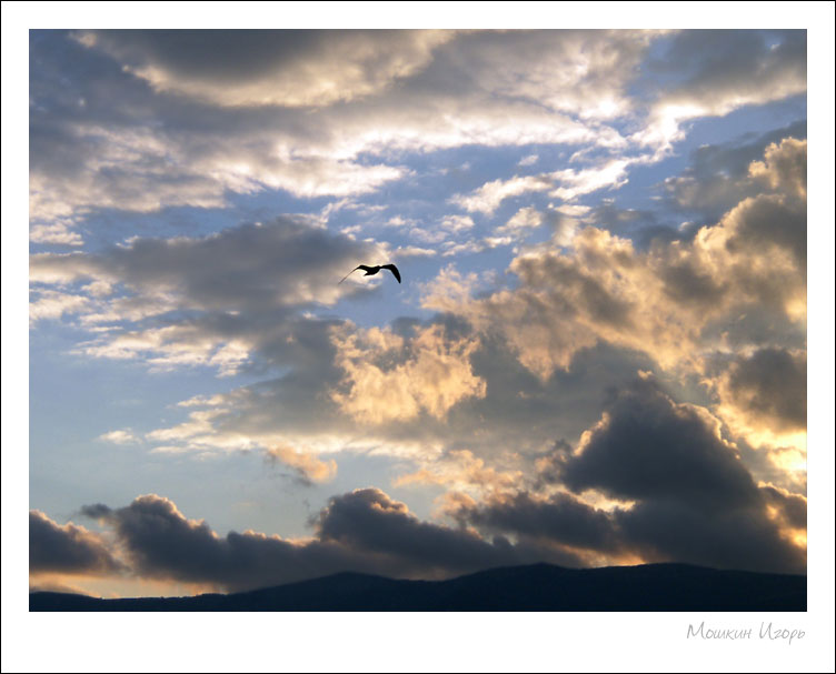 """фото """"Чайка 4"""" метки: природа, пейзаж, дикие животные, закат"""