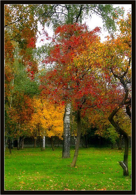 """фото """"""""ЦВЕТА ОСЕНИ"""""""" метки: пейзаж, осень"""