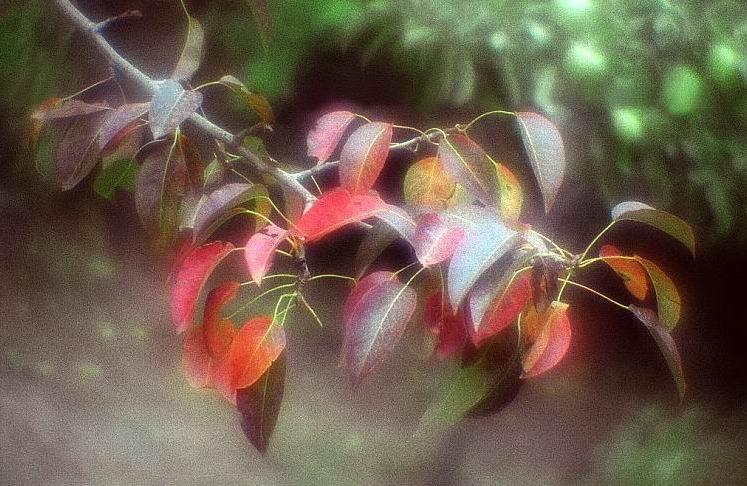 """фото """"Знаки Осени..."""" метки: природа, натюрморт, цветы"""