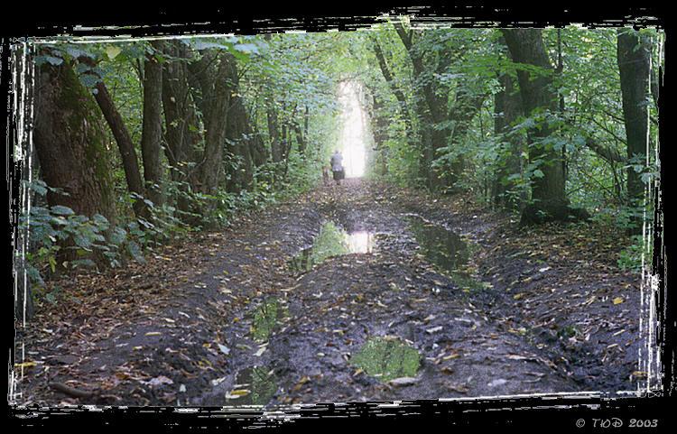 """фото """"Осенние прогулки"""" метки: природа,"""