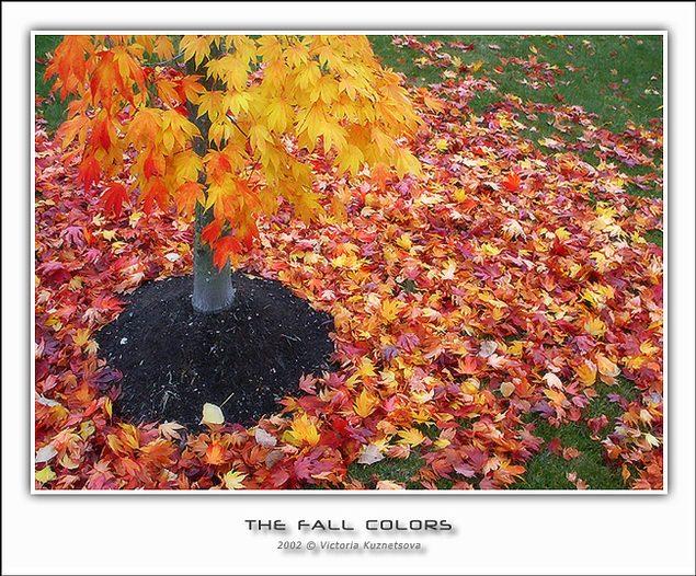 "фото ""-*-*-"" метки: пейзаж, разное, осень"