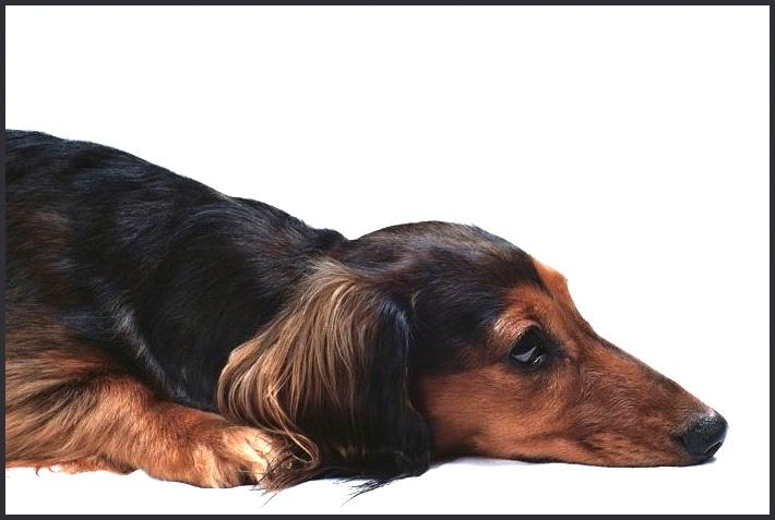 """фото """"устала"""" метки: природа, портрет, домашние животные"""