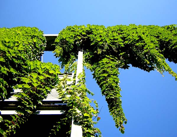 "фото ""Heaven Is Coming Down"" метки: архитектура, природа, пейзаж, цветы"