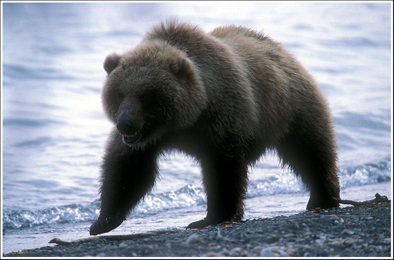 """фото """"Mister Grumpy"""" метки: природа, дикие животные"""