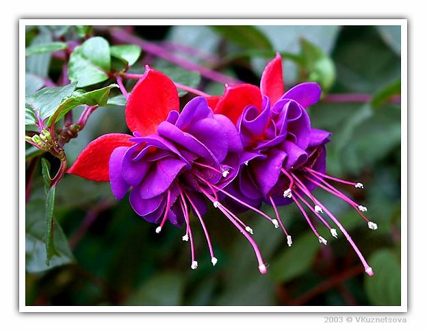 """фото """"*_*_*"""" метки: макро и крупный план, природа, цветы"""