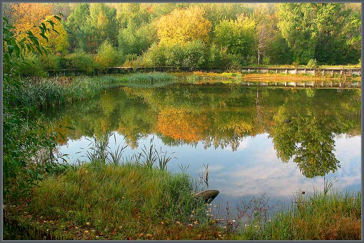 """фото """"Заброшенный пруд"""" метки: пейзаж, вода, осень"""