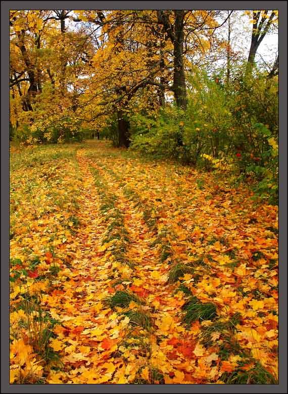 """фото """"Осенние кадры-7"""" метки: пейзаж, лес, осень"""