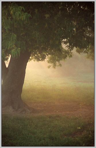 """фото """"Дерево света"""" метки: пейзаж, лес, осень"""