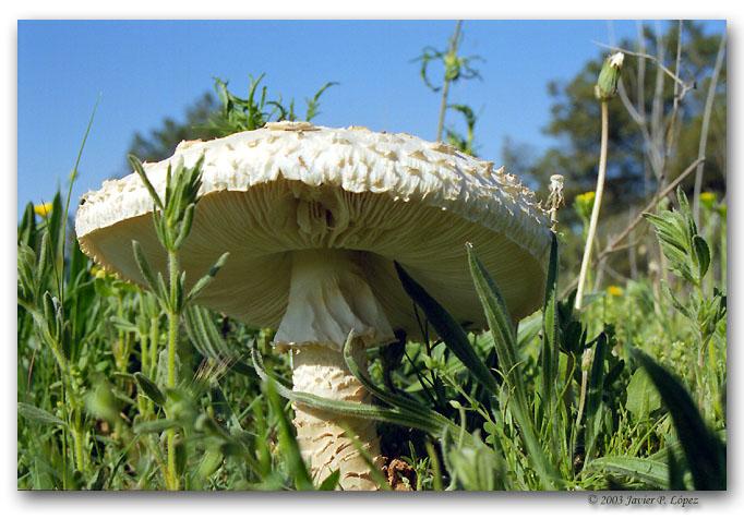 """фото """"In the forest"""" метки: макро и крупный план, природа, цветы"""