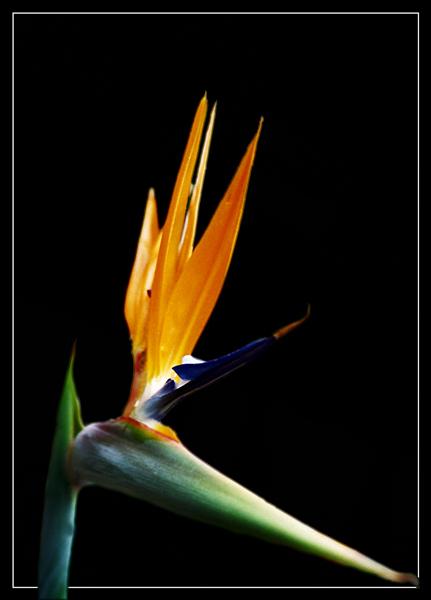 """фото """"Без названия"""" метки: макро и крупный план, природа, цветы"""