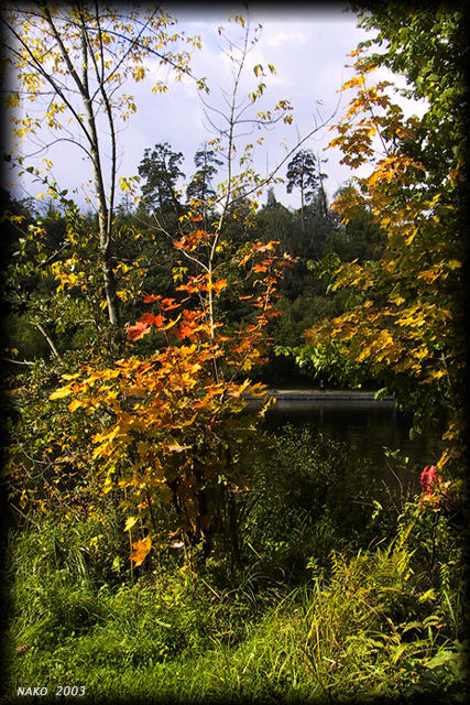 """фото """"Золото осени"""" метки: природа, пейзаж, осень, цветы"""