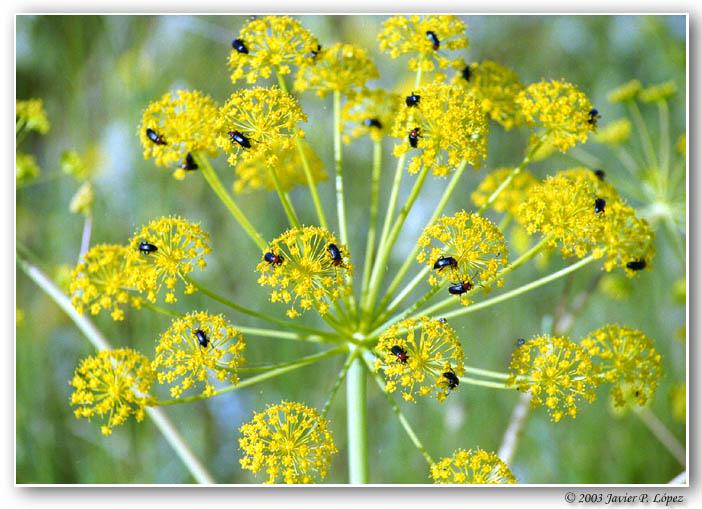 """фото """"Overbooking"""" метки: макро и крупный план, природа, насекомое"""