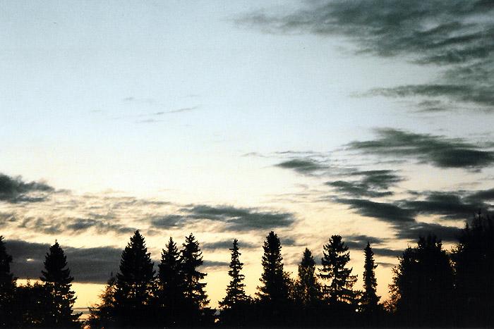 "фото ""Forest in the evening"" метки: пейзаж, закат, лес"