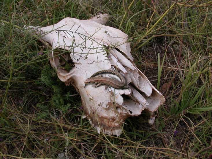 """фото """"Песнь о Вещей Буренке"""" метки: природа, дикие животные"""