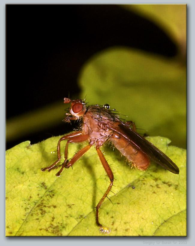 """фото """"Осень, дождь, макро…"""" метки: макро и крупный план, природа, насекомое"""