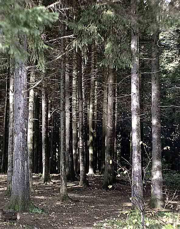 "фото ""Ельник"" метки: природа,"