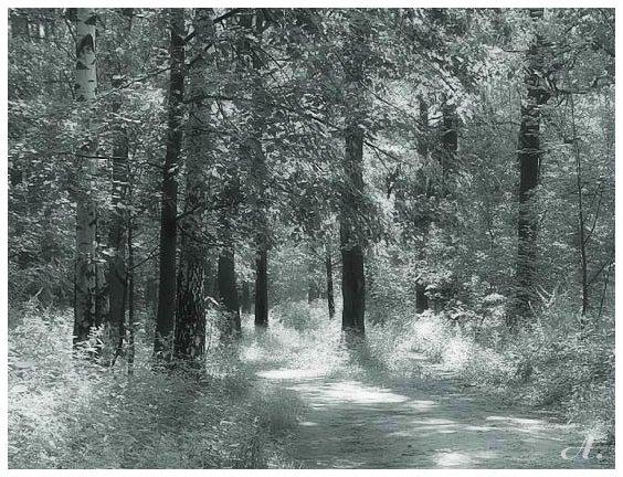 "фото ""В лесу"" метки: черно-белые,"