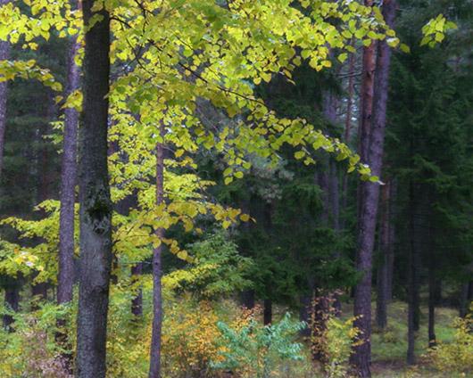 "фото ""landscape without birds"" метки: пейзаж, лес"