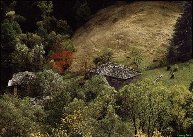 "photo ""the rest neighbourhood"" tags: landscape, autumn, forest"