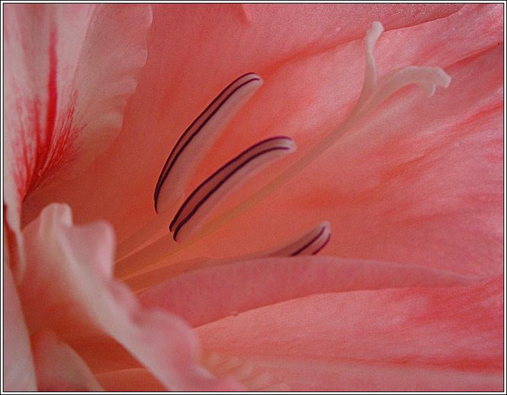 """фото """"Обнажая..."""" метки: природа, макро и крупный план, цветы"""