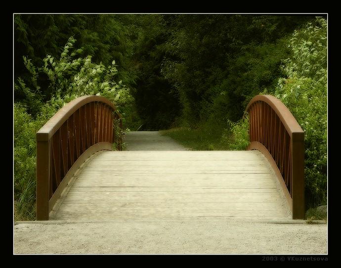 "фото ""****"" метки: пейзаж, лес, лето"