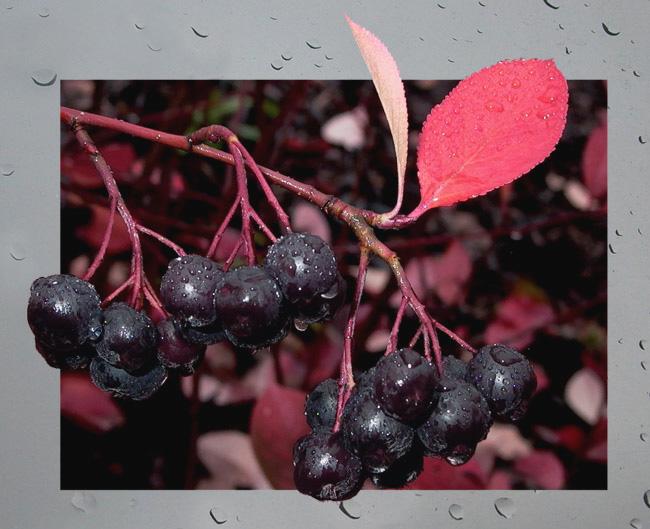 "фото ""Rainy day."" метки: природа, цветы"