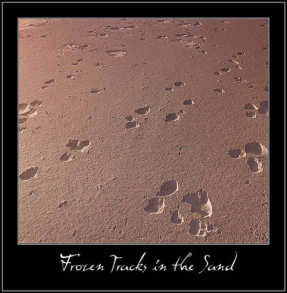 "фото ""Frozen Tracks in the Sand"" метки: путешествия, макро и крупный план, Северная Америка"