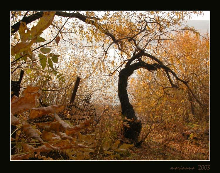 "фото ""_#_"" метки: разное, пейзаж, осень"