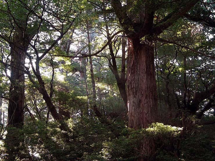"фото ""Deep in the Woods"" метки: пейзаж, лес"