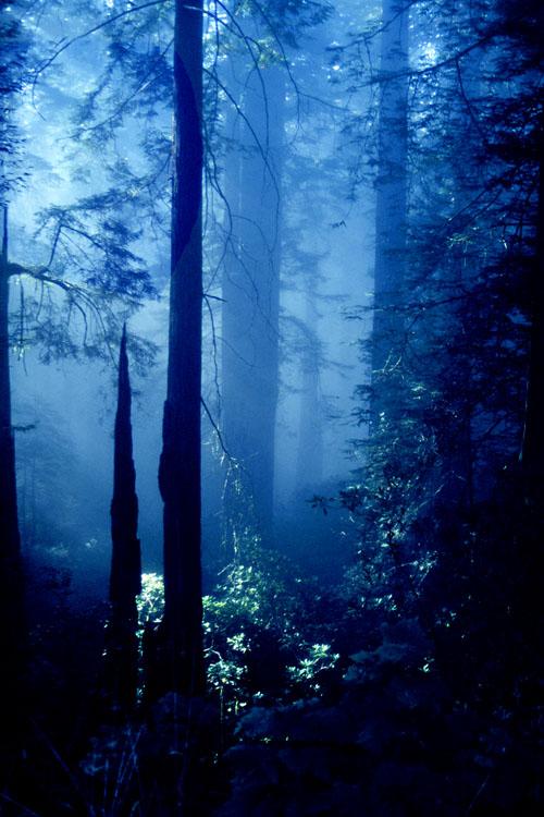 "фото ""Oregon Forest"" метки: пейзаж, лес"