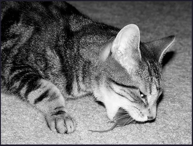 """фото """"Pest Control"""" метки: черно-белые, природа, домашние животные"""