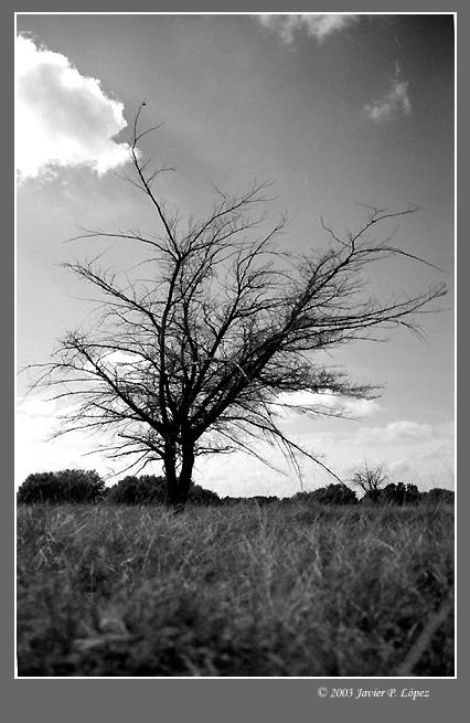 "фото ""Autumn fashions"" метки: черно-белые, пейзаж, лес"