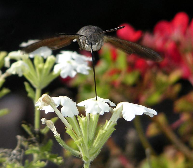 """фото """"Последние сборы..."""" метки: фотомонтаж, природа, насекомое"""