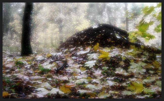 """фото """"dormant"""" метки: разное,"""
